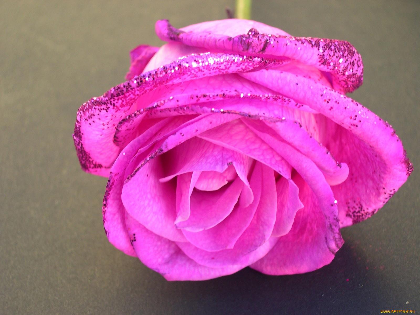 посмотреть картинки розы с блестками символы